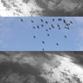 gabriela fine art photography- Tito's Pigeons